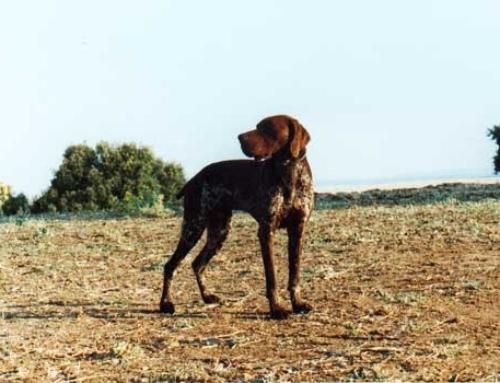 Bull Montes del Rincón